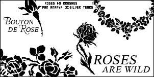 Brushes by Anarya Roses